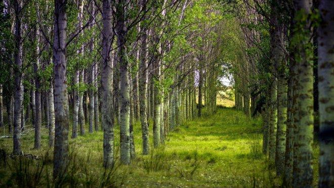 Преимущества и недостатки растительных обоев