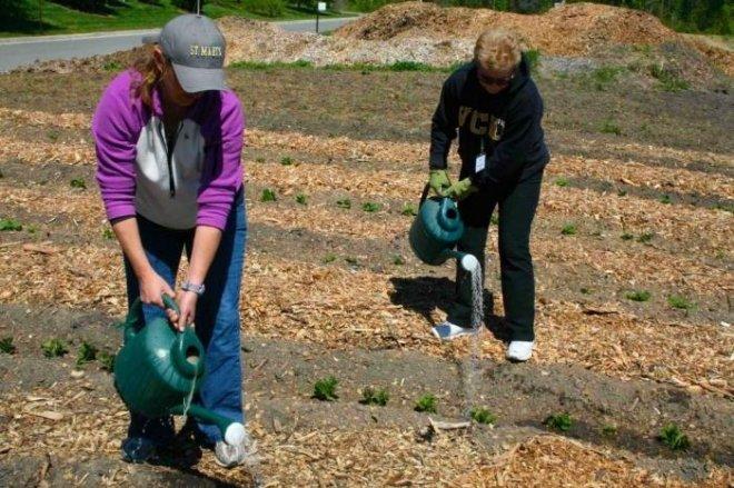 Когда и чем удобрять овощи на огороде