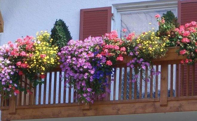 Какие цветы посадить на балконе, чтобы цвели все лето