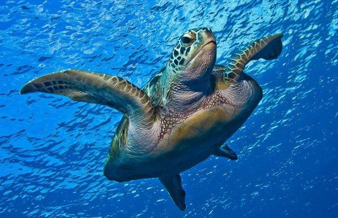 подводный мир Пхукета