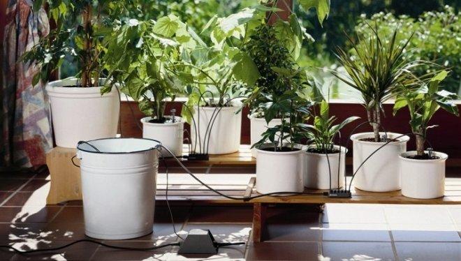 Система автополива комнатных растений или как уберечь растения на время отпуска от высыхания