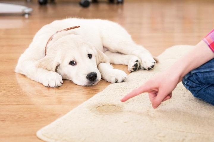 Как можно устранить запах собачьей мочи