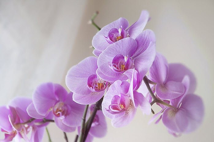 Уход за орхидеями в зимний период: советы и рекомендации