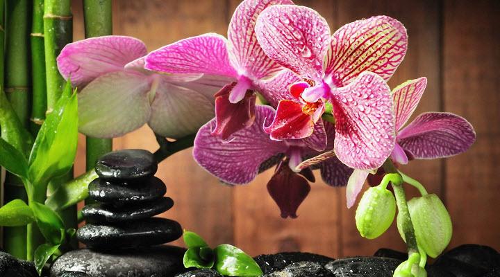 Грунт для орхидей: готовим растение к пересадке