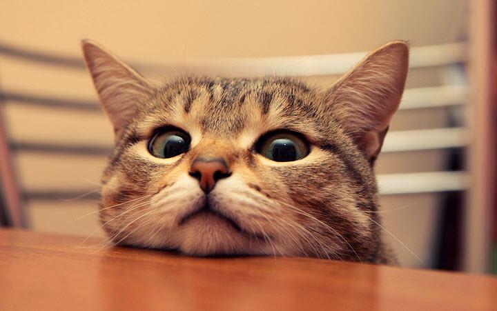 Как избавить кошку от перхоти?