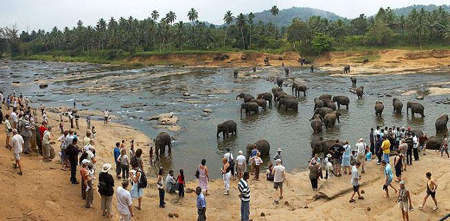 приют для слонов Пинавелла