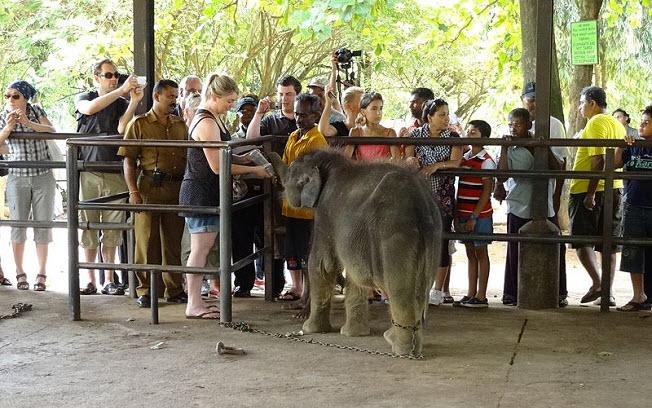девушка кормит слоненка Пинавелла