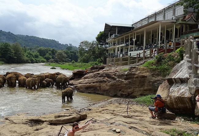 купание слонов Шри-Ланка