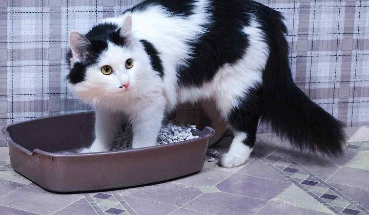 7 причин, по которым кошка ходит мимо лотка