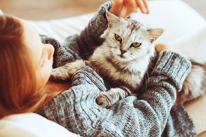 Как кошки нас лечат