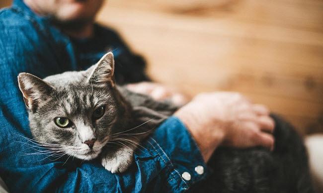 как лечат домашние кошки