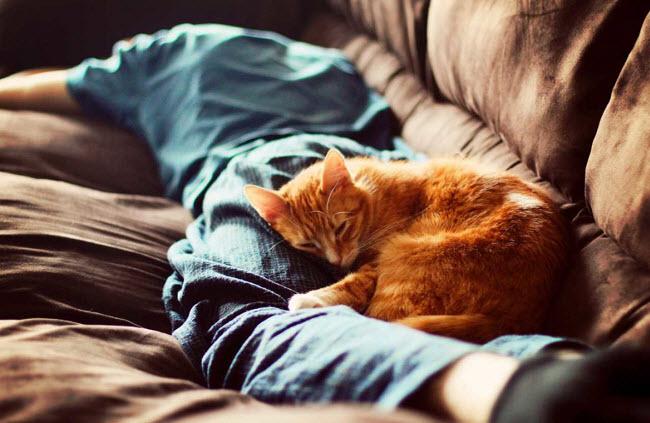 как лечат кошки человека