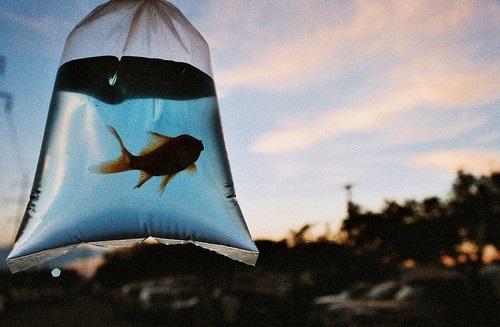 к чему снится рыба мужчине по Фрейду