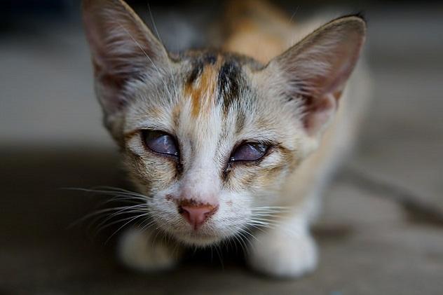 у кошки больные глаза
