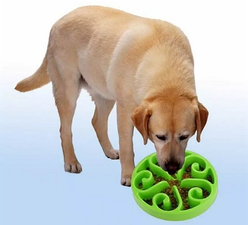 разделенная миска для собак