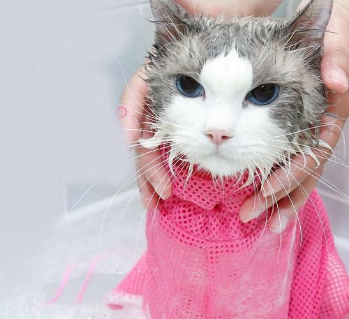 сетка для мытья кошек