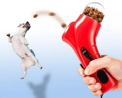собака ловит вкусняшки